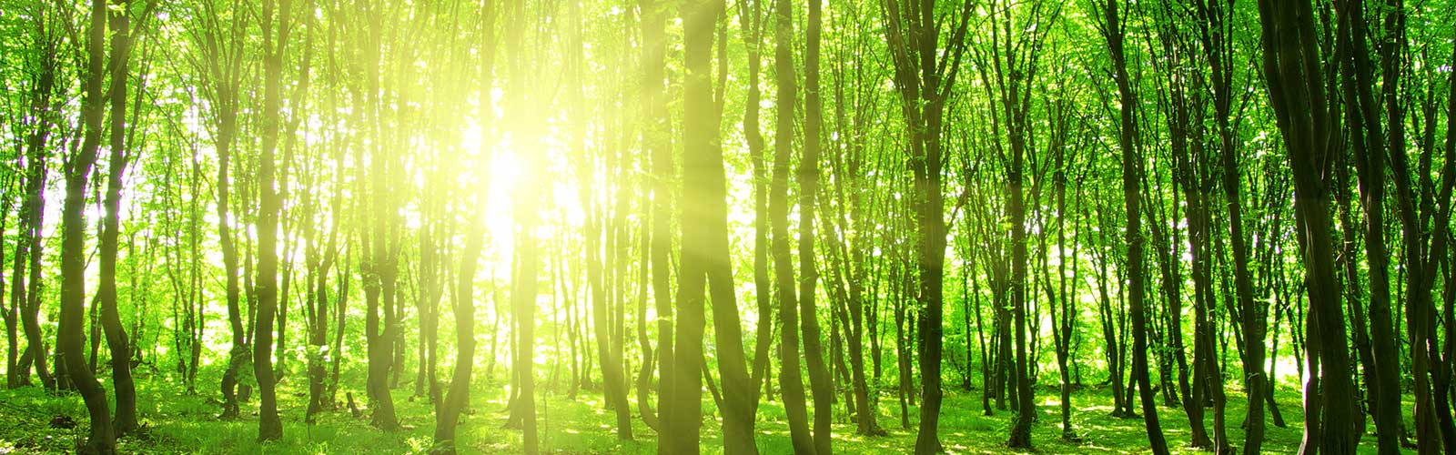 Green Living in a Technological World